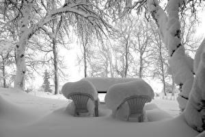 Фотография Зимние Снег Кресло Природа