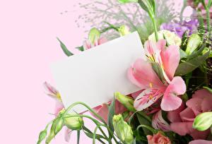 Фотографии Альстрёмерия Цветной фон Шаблон поздравительной открытки Бутон Лист бумаги
