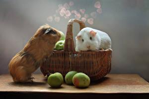 Обои Яблоки Морские свинки Корзинка Вдвоем Животные
