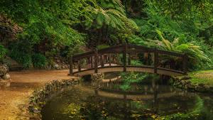 Фотография Австралия Парки Пруд Мост Alfred Nicholas Memorial Gardens Природа