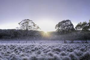Фотографии Австралия Парки Зима Рассветы и закаты HDR Деревья Трава Barrington Tops National Park Природа