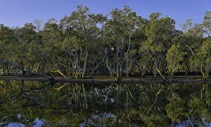 Картинки Австралия Реки Деревья Отражение Brooklyn Hawkesbury River Природа