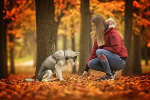 Картинка Осенние Собаки Хаски Животные Девушки