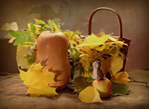 Фотографии Осенние Тыква Яблоки Ежи Листва Пища