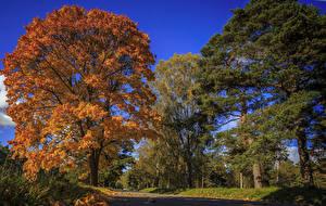Фотографии Осень Дороги Деревья Природа