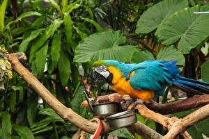 Картинки Птицы Попугаи Ветвь Животные