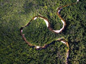 Фото Бразилия Леса Реки Сверху Amazon Jungle Природа