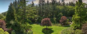Картинки Канада Парк Деревья Кусты Газон Ели Butchart Gardens Природа