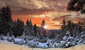 Фотографии Канада Парки Леса Зимние Рассветы и закаты Небо Йосемити Ель Снег