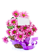 Фотографии Хризантемы Белый фон Шаблон поздравительной открытки Корзина Ленточка Розовый Цветы