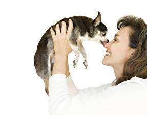 Фотография Собаки Белом фоне Шатенка Улыбка Чихуахуа Рука Щенок Девушки