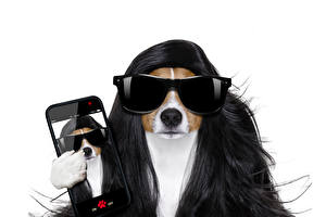 Фото Собаки Белый фон Волосы Джек-рассел-терьер Смартфон Очки Смешные