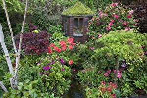 Фотография Англия Сады Рододендрон Кусты Мох Walsall Garden Природа