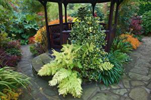 Фото Англия Сады Кусты Walsall Garden Природа