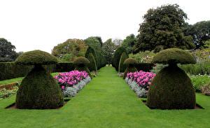 Обои Англия Парки Дизайн Газоне Кусты Hinton Ampner Природа