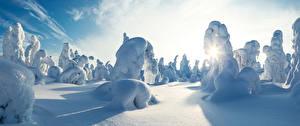Картинка Финляндия Зимние Снег Kuntivaara Природа