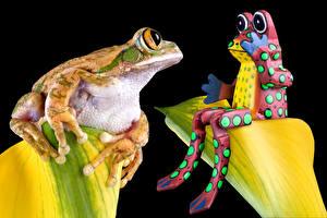 Картинка Лягушки Черный фон 2