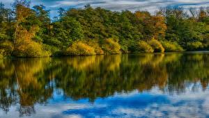 Фото Германия Леса Речка Осенние Ahausen Saxony Природа