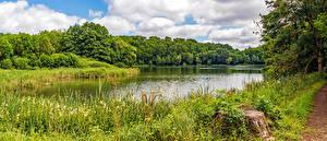 Картинки Германия Лето Леса Озеро Трава Пне Gillenfeld