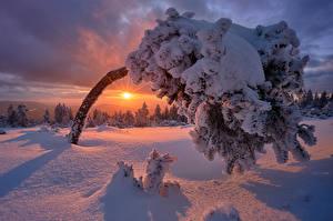 Картинки Германия Рассветы и закаты Зимние Снег Деревья Солнце Gemeinde Baiersbronn Природа