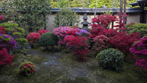 Фотография Япония Киото Парки Рододендрон Кусты Природа