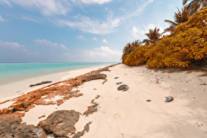 Обои Мальдивы Тропики Побережье Осенние Камни Кусты Пляж Thoddoo