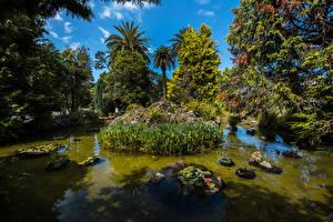 Обои Новая Зеландия Парки Пруд Камни Деревья Auckland Domain Garden Природа