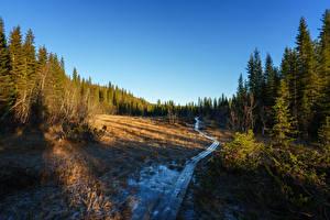 Картинки Норвегия Леса Ель Тропинка