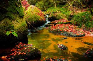 Картинки Парки Осенние Камень Водопады Мох Листва Природа