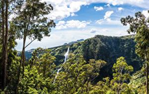 Обои Португалия Тропики Водопады Скала Деревья Madeira Природа
