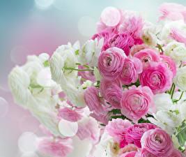 Обои Лютик Много Вблизи Цветы
