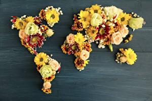 Картинка Розы Хризантемы География Доски Дизайн цветок