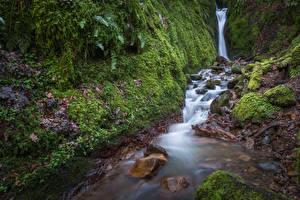 Картинки Шотландия Водопады Камень Мох Dollar Glen Природа