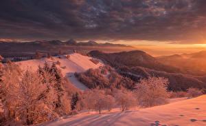 Картинки Словения Зимние Рассветы и закаты Леса Снег Холмы Radovljica
