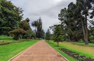 Обои Шри-Ланка Парки Газон Деревья Queen Victoria Park Природа