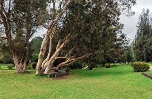 Фотография Шри-Ланка Тропики Парки Деревья Газон Скамейка Nuwara Eliya Queen Victoria Park
