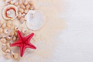 Фото Морские звезды Ракушки Жемчуг