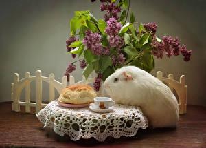 Фотографии Натюрморт Морские свинки Сирень Булочки Чашка Стол Животные