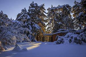 Фото Швеция Зимние Снег Ель Природа