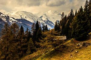Картинка Швейцария Горы Леса Альпы Ель Природа