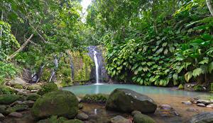 Фотография Тропики Водопады Камни Скала Мох Guadeloupe Sainte-Rose Cascade Bis Природа