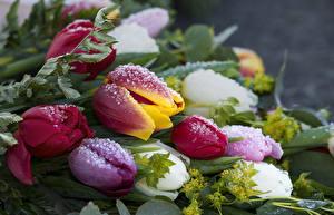 Картинки Тюльпаны Вблизи Капли Лед Цветы