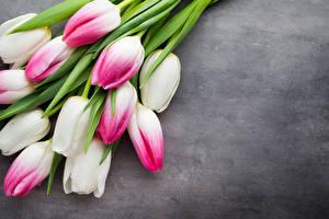 Фото Тюльпаны Вблизи Серый фон