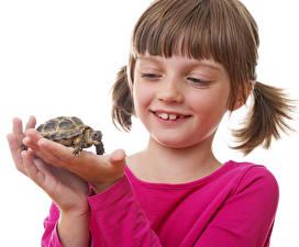 Фото Черепахи Белый фон Девочки Руки Ребёнок