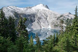 Картинки США Парки Горы Озеро Ель Mount Rainier National Park Cyclone Lake