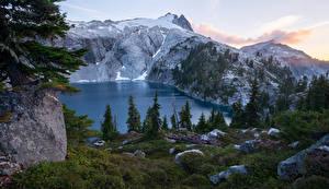 Картинки Штаты Парки Горы Озеро Камень Трава Ель Mount Rainier National Park Cyclone Lake