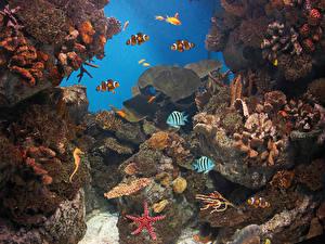 Картинки Подводный мир Кораллы Рыбы Животные