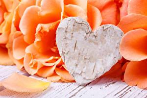 Картинки День святого Валентина Роза Оранжевых Сердце Лепестки Цветы