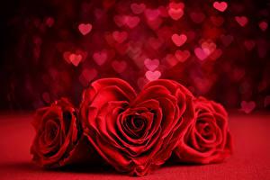 Фотография День всех влюблённых Розы Втроем Красный Сердечко Цветы