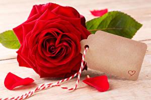 Фотография День святого Валентина Роза Доски Шаблон поздравительной открытки Красные Лепестки Сердечко Цветы